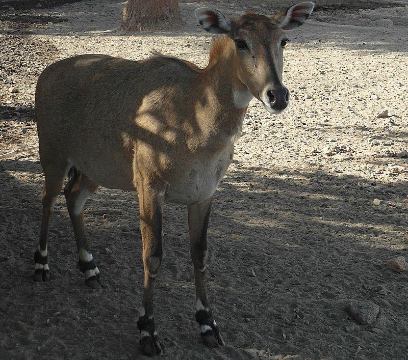 Зоопарк Индор