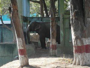 Слоны Индор