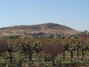 виноградники Индии