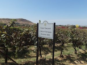 Вино в Индии