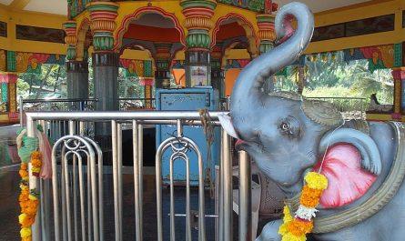 Слон в храме Гоа