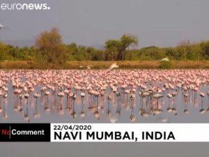 Фламинго в Мумбаи