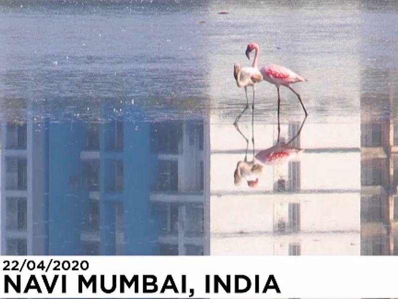 Фламинго в Индии