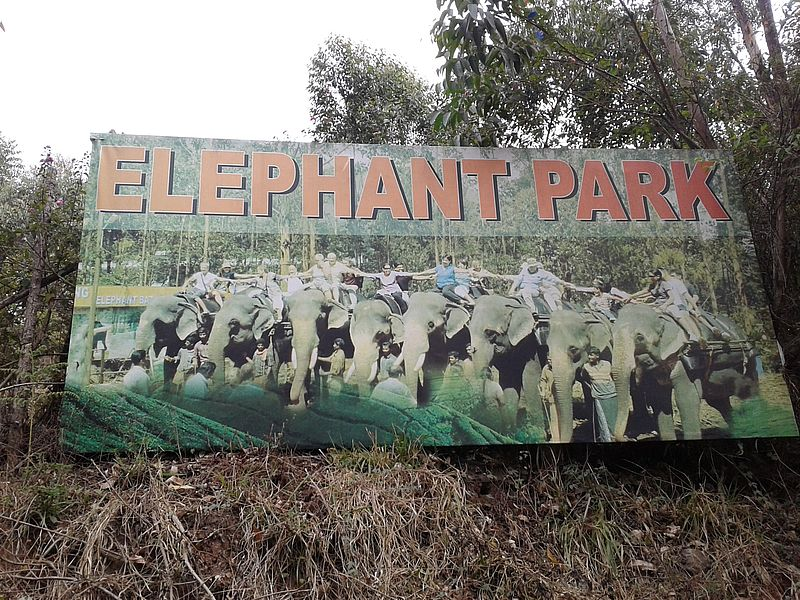 Слоны Муннар