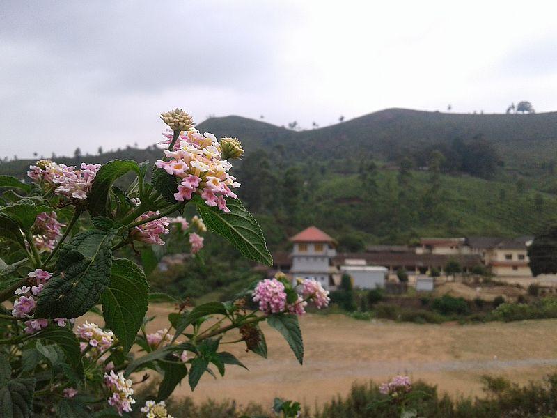 В Муннаре