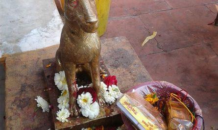 Собака в храме