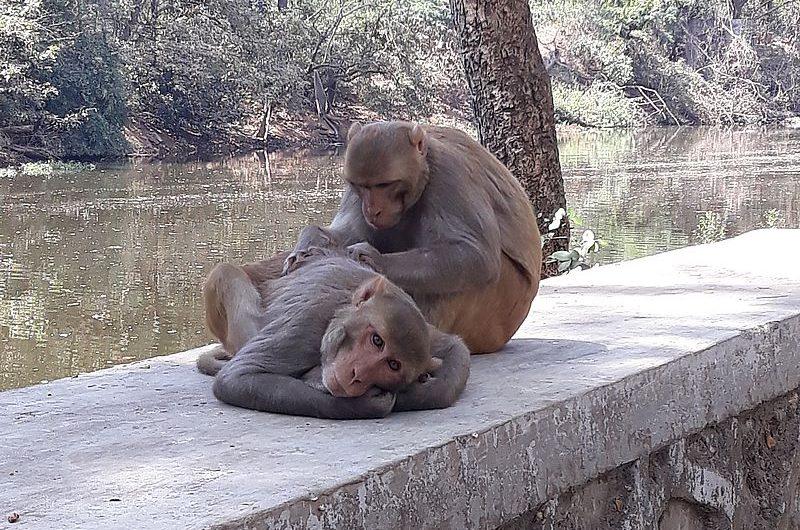 Национальный парк Боривали в Мумбаи: рай для любителей природы и истории