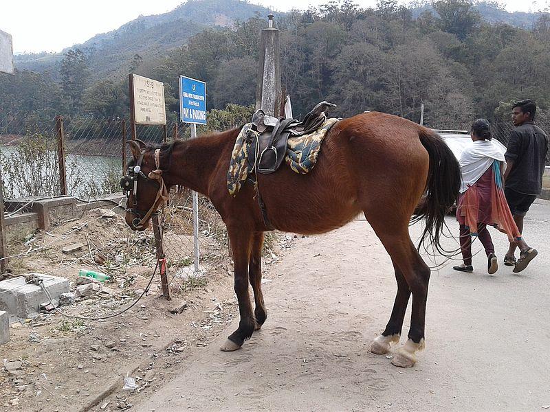 Лошади Индии