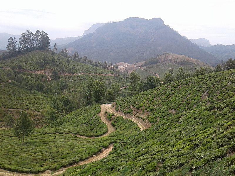 Чай Муннара