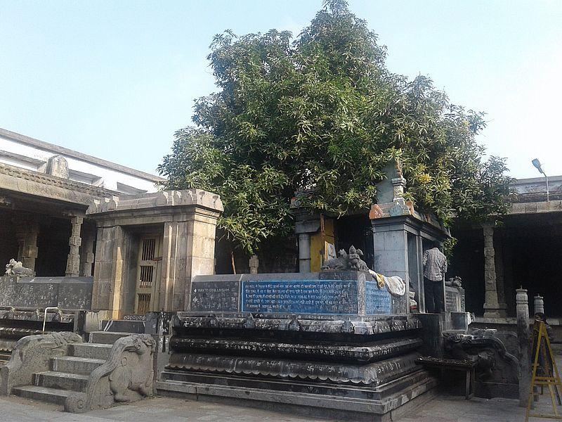 Манго дерево в Экамбарнатхе