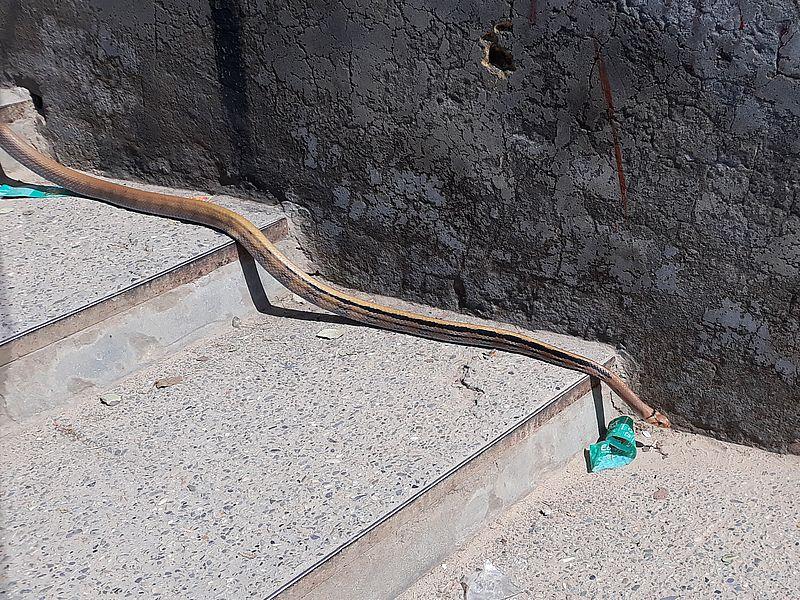 Змея в храме