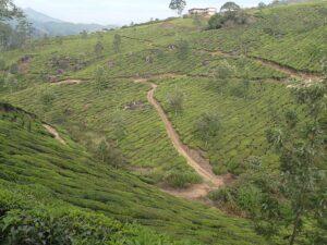 Дорога среди чая Индия