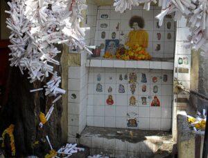 Кальпаврикша Саи Баба