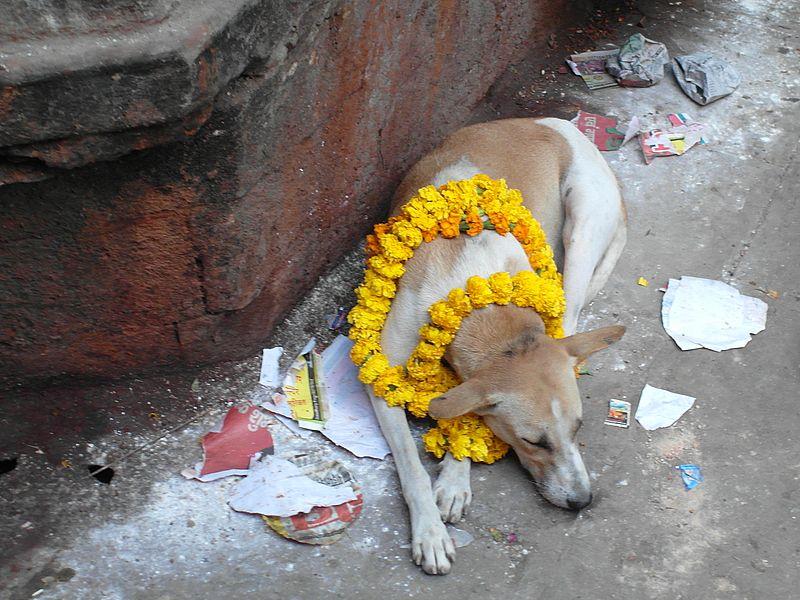 Собака вахана Бхайрава