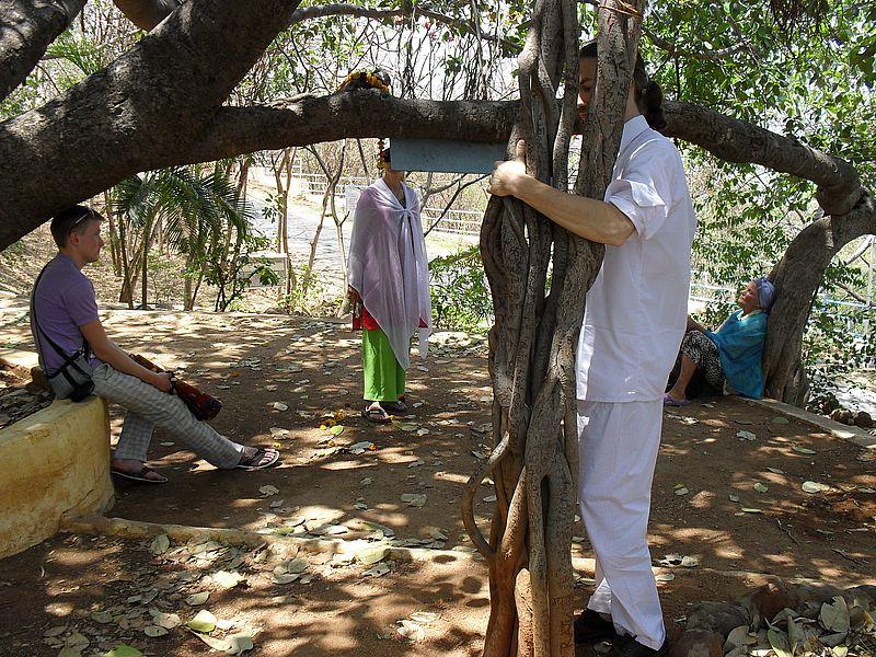 Дерево медитации