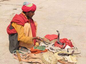 Змеи Индии