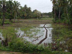 Индия или Шри-Ланка