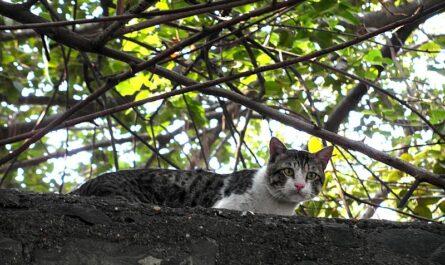 Коты в Индии