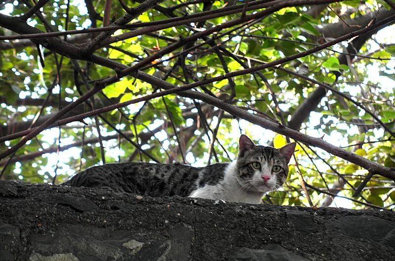 Почему в Индии не любят кошек?