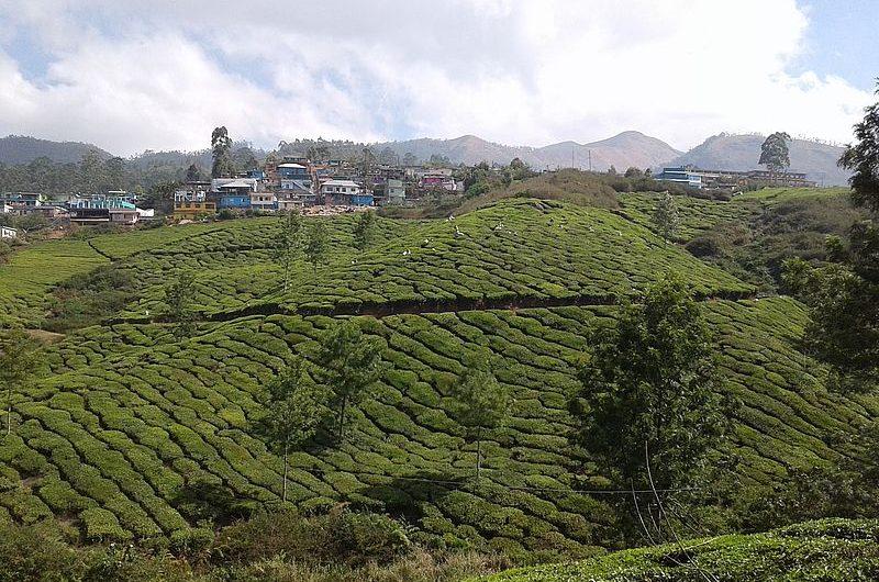 Муннар: чайная столица Кералы