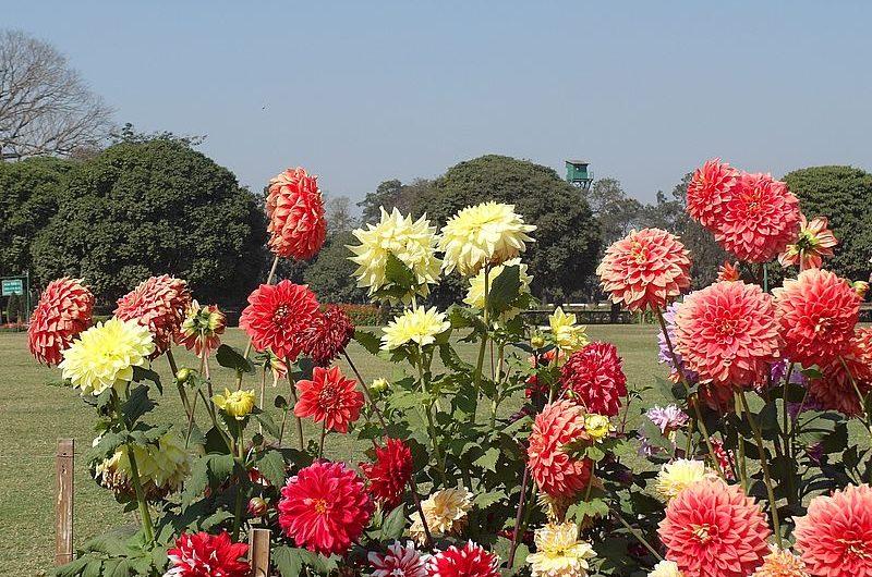 Парк Майдан в Калькутте: сердце города