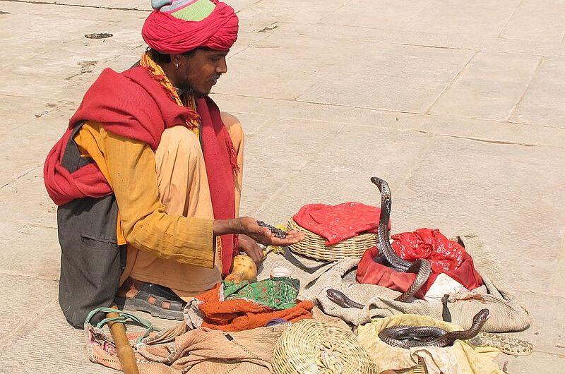 ТОП-3 самых опасных животных Индии