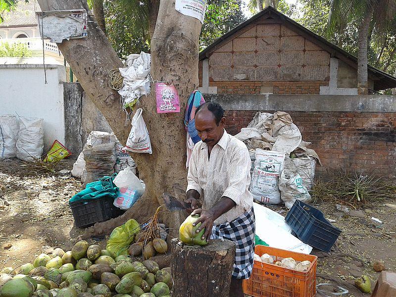 Кокосы Индия